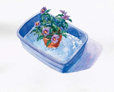 Dunk small potted plants, soil and all, in soapy water to eliminate pests.