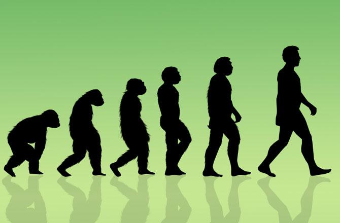 Human Evolution Wallpapers 2020 - Broken Panda