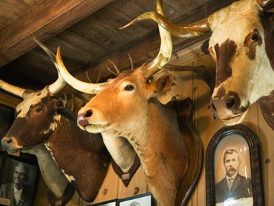 Introduction To Hunting Trophies Howstuffworks