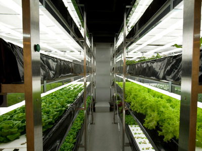Hydroponics Growing and the Future of Agriculture