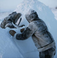 Inuit Indians build an igloo