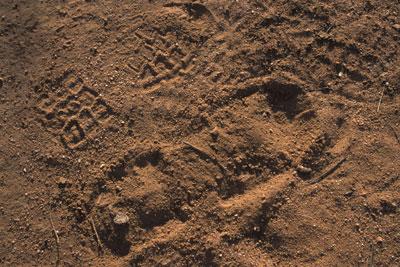 Impression Evidence -- Footprints, Tire Tread and Tool Marks