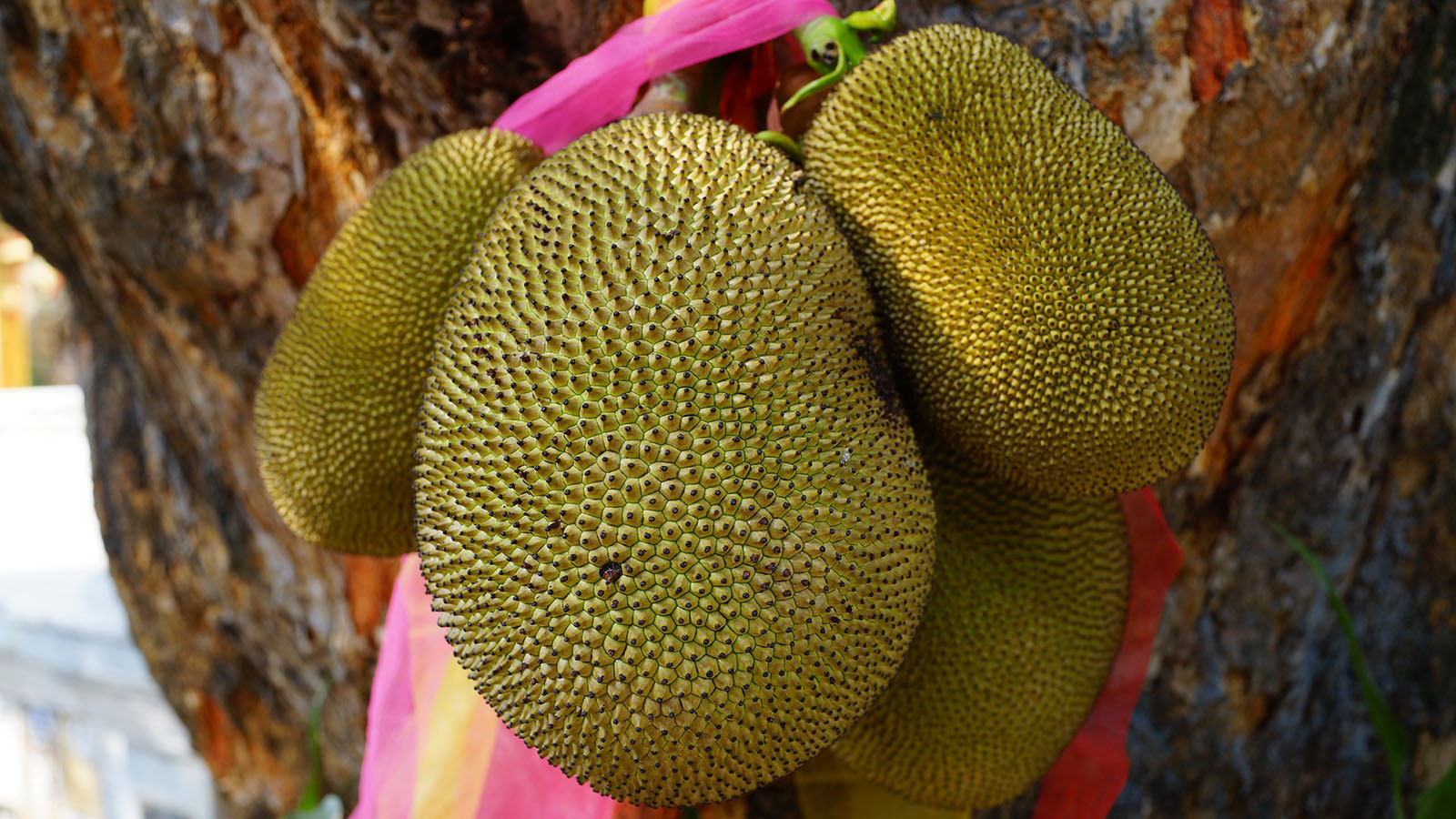Jackfruit Is a Stinky, but Otherwise, Perfect Fruit
