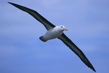Dont Shoot the Albatross!: Nautical Myths and Superstitions