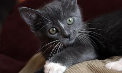 How to Treat a Cat That has Diarrhea: Tips and Guidelines | HowStuffWorks