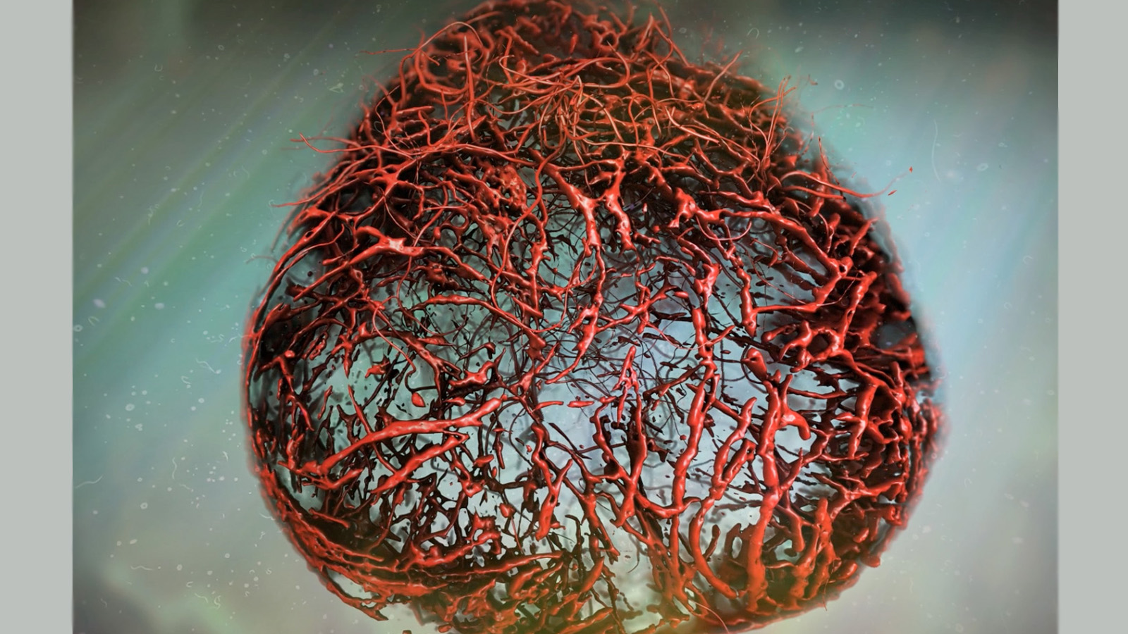 Scientists Grow Human Blood Vessels in Lab