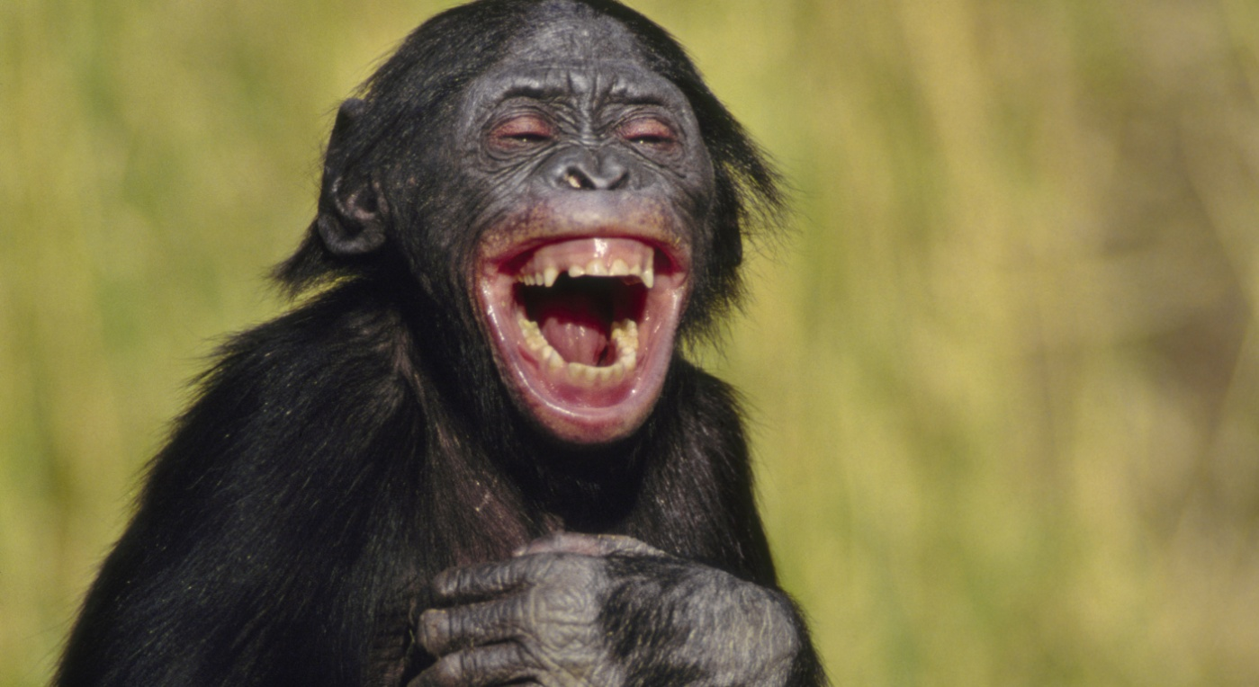 Do animals laugh?   HowStuffWorks