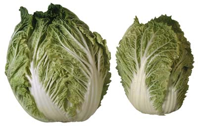 heads of lettuce