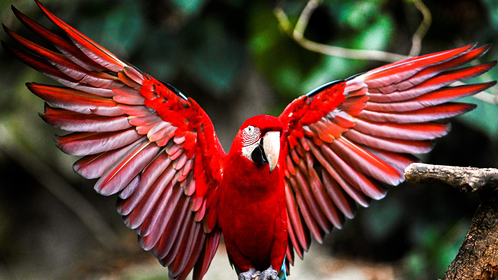Yes, Macaws Can Talk (and Say Bad Words!)   HowStuffWorks