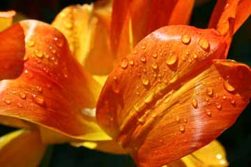 What Is Macro Nature Photography Howstuffworks