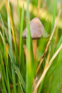 Types of Magic Mushrooms - How Magic Mushrooms Work | HowStuffWorks