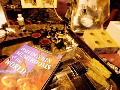 Magic Mushrooms and the Law - How Magic Mushrooms Work