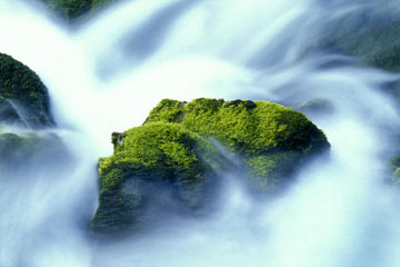 How To Grow Moss How Moss Works Howstuffworks