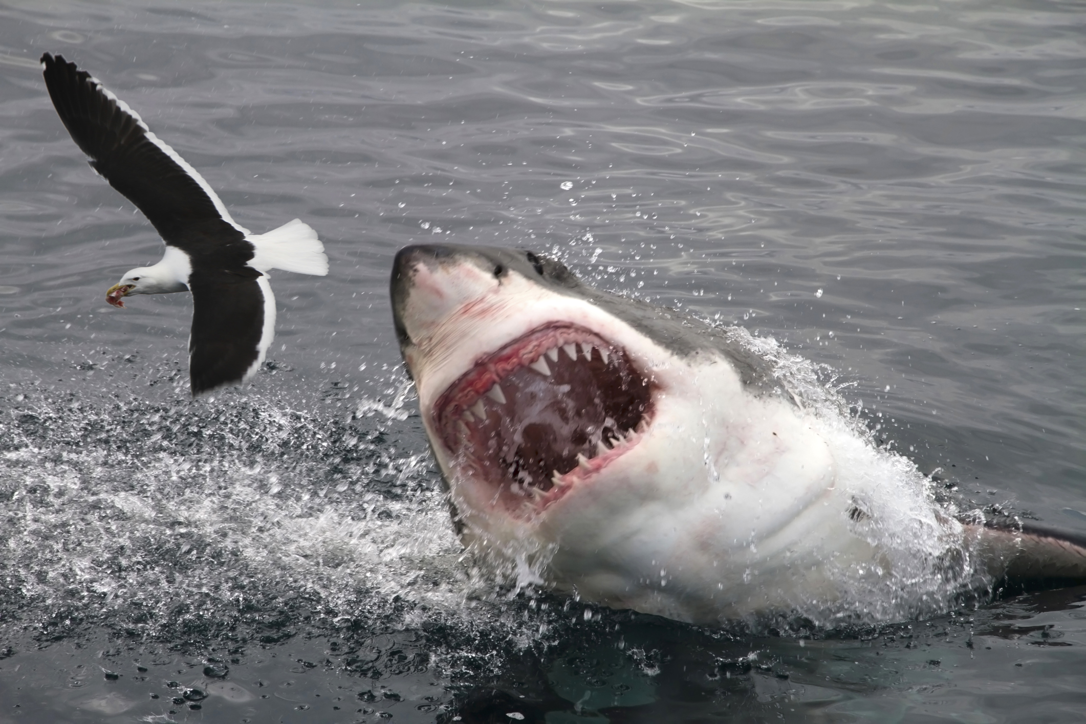 10 Most Dangerous Places For Shark Attacks Howstuffworks