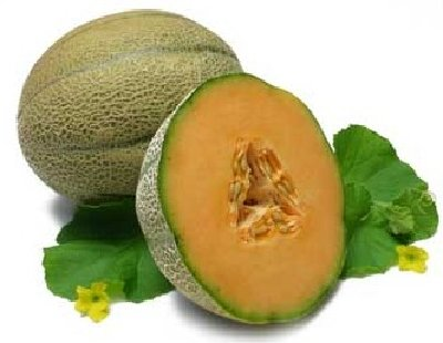 The netted melon or muskmelon is very often called a cantaloupe.