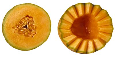 Muskmelon, cantaloupe can be grown from seeds or by transplants.