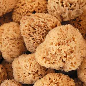 Are Natural Sea Sponges Good For My Skin Howstuffworks