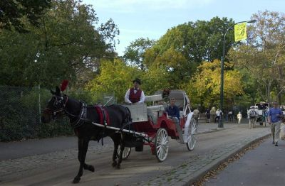 A horse-drawn carriage ride in Central Park.