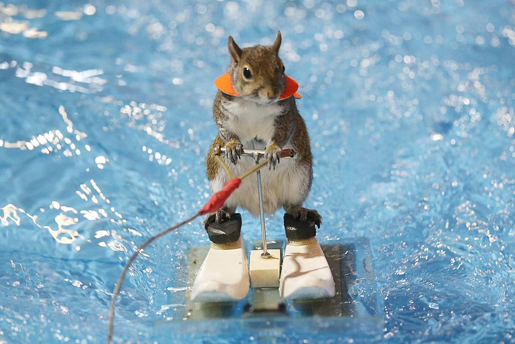 10 Animals With Better Jobs Than You | HowStuffWorks