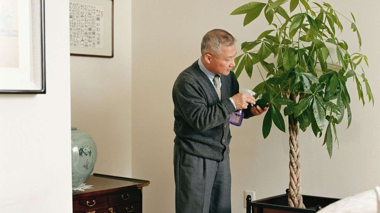 Historically, Houseplants Were For Rich; Now, Chinese Money ... on tall indoor containers, tall vines, tall indoor shrubs, large houseplants, 10 most common houseplants, tall indoor grass, tall indoor bamboo, tall flowering houseplants, tall indoor foliage, tall books, tall indoor palms, leafy houseplants, tall indoor cactus, tall trees, tall indoor planters, tall flowers, tall modern houseplants, tall indoor fountains, types of tall houseplants, tall plants,