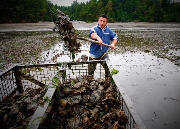 Researching how oil spills affect algae Algae Industry