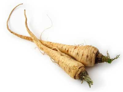 Parsnips are unfamiliar to many Americans, but they are similar to carrots.