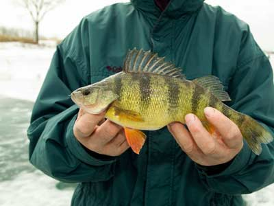 Tip 2: Perch Lures and Bait - Perch Lures and Baits