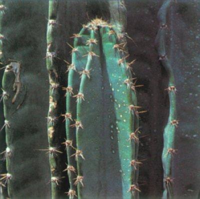 Peruvian Apple Cactus: A Portrait of a House Plant ... on tropical house plant identification, flowering plant identification, succulent plant identification, indoor ivy plant identification,