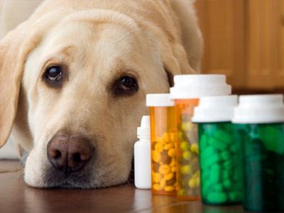 How Pet Meds for Traveling Works   HowStuffWorks