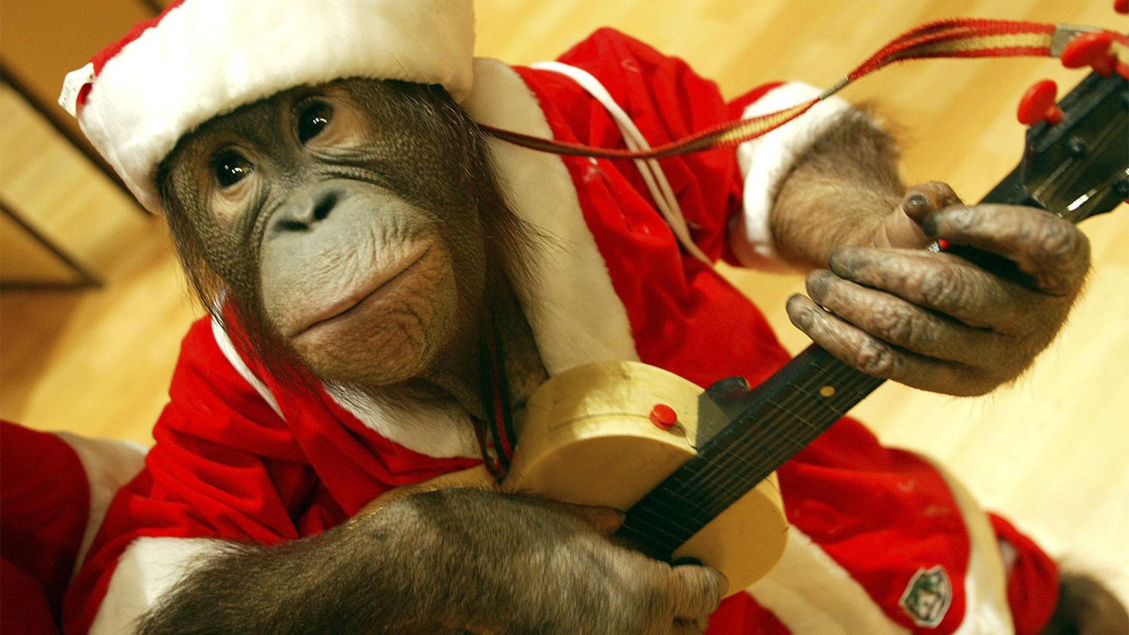6 Reasons Monkeys Should Never Be Pets | HowStuffWorks