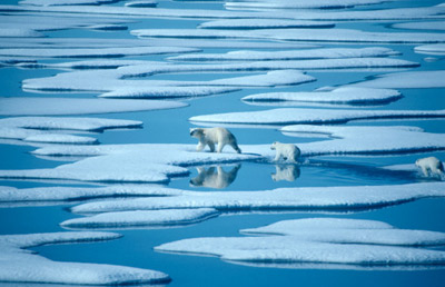 What does global warming have to do with the decline in the