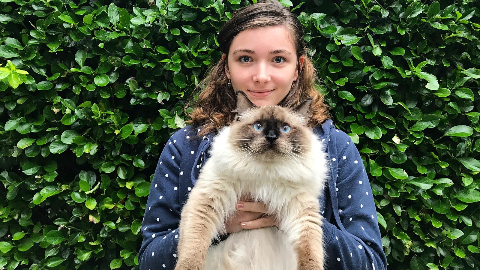 Ragdoll Cats Are The Floppiest Friendliest Felines Around Howstuffworks