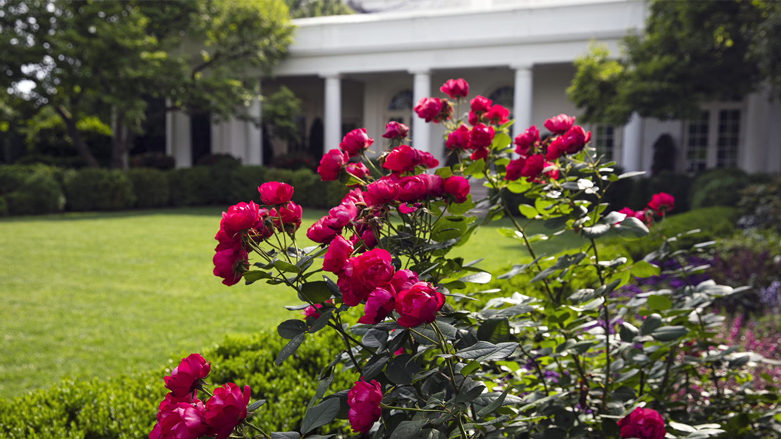 How The White House Rose Garden Became The Most Famous Garden In The World Howstuffworks