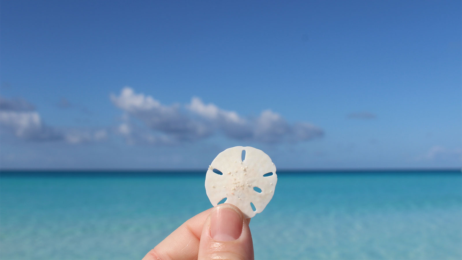 Is It Ok To Take Sand Dollars Off The Beach Howstuffworks