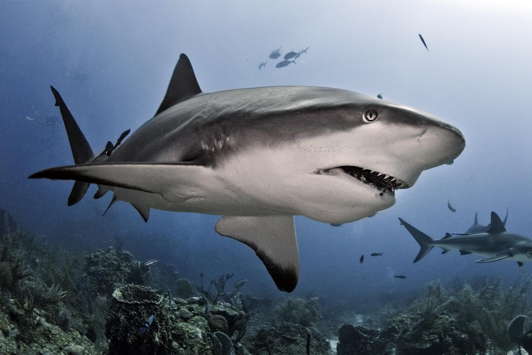 Shark Senses | HowStuffWorks