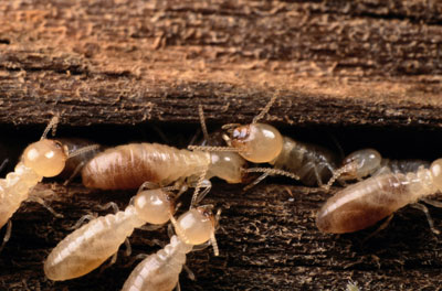Termites Eating Your House While You Sleep - YouTube |Termites Eating House