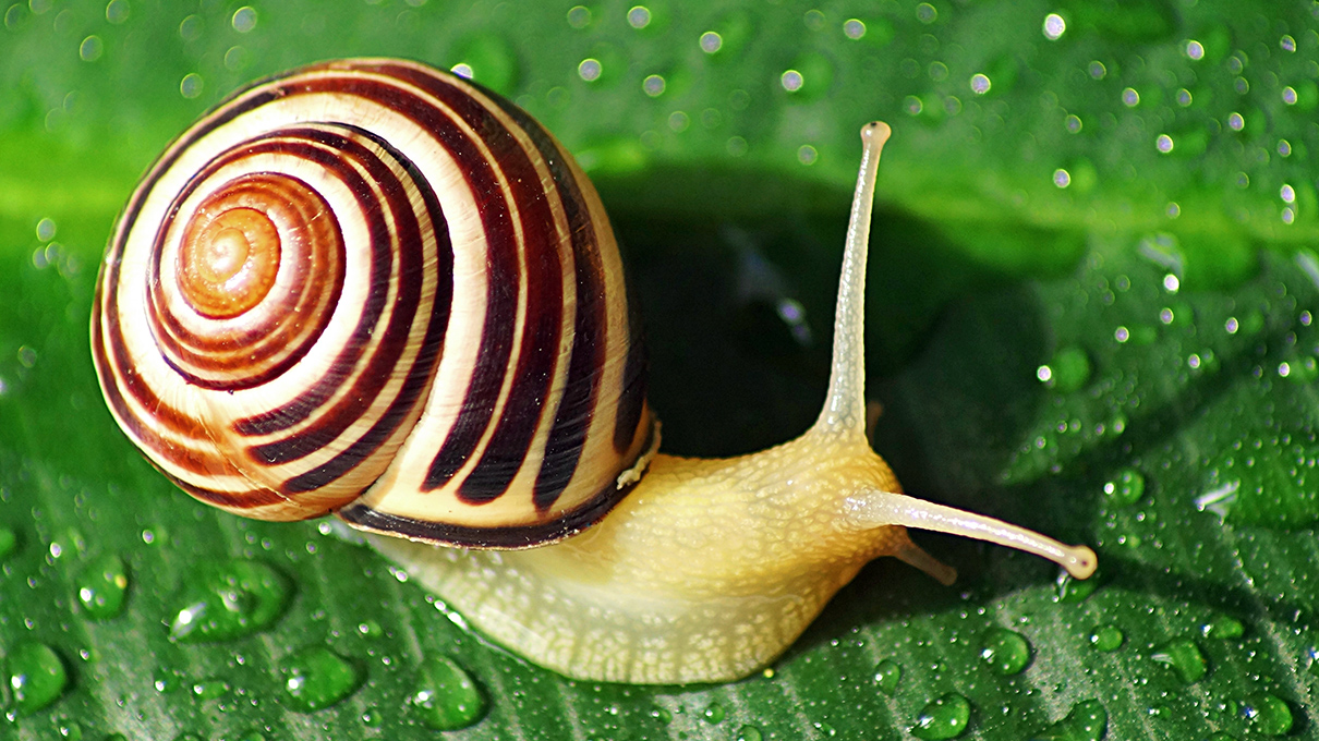 How Do Snails Get Their Shells? | HowStuffWorks