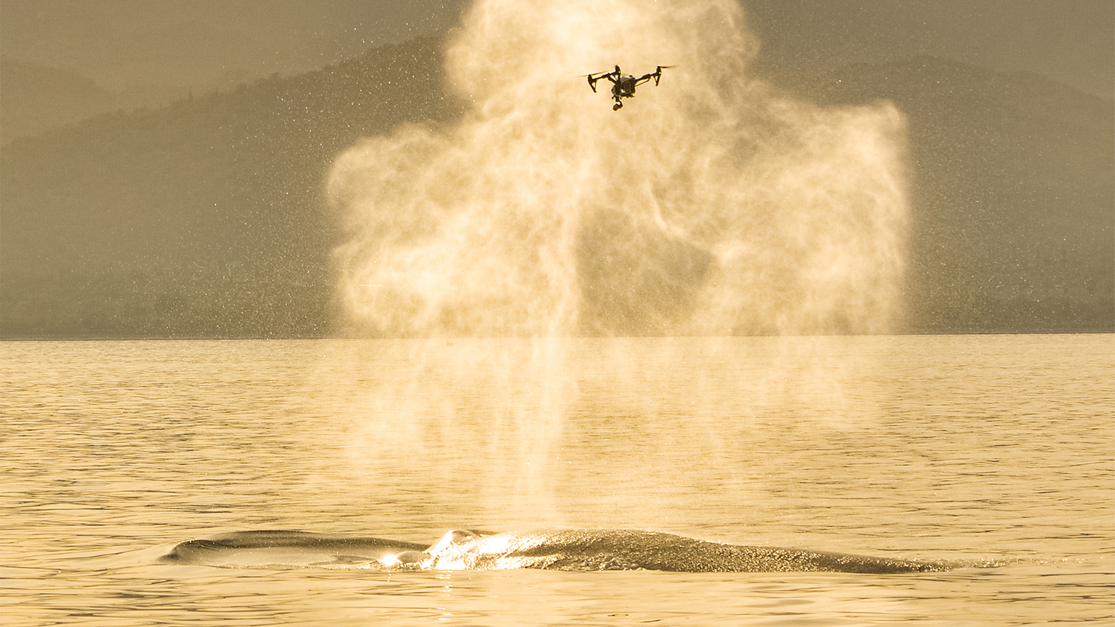 The 'SnotBot' Drone Is Making Scientific Research Easier on Whales