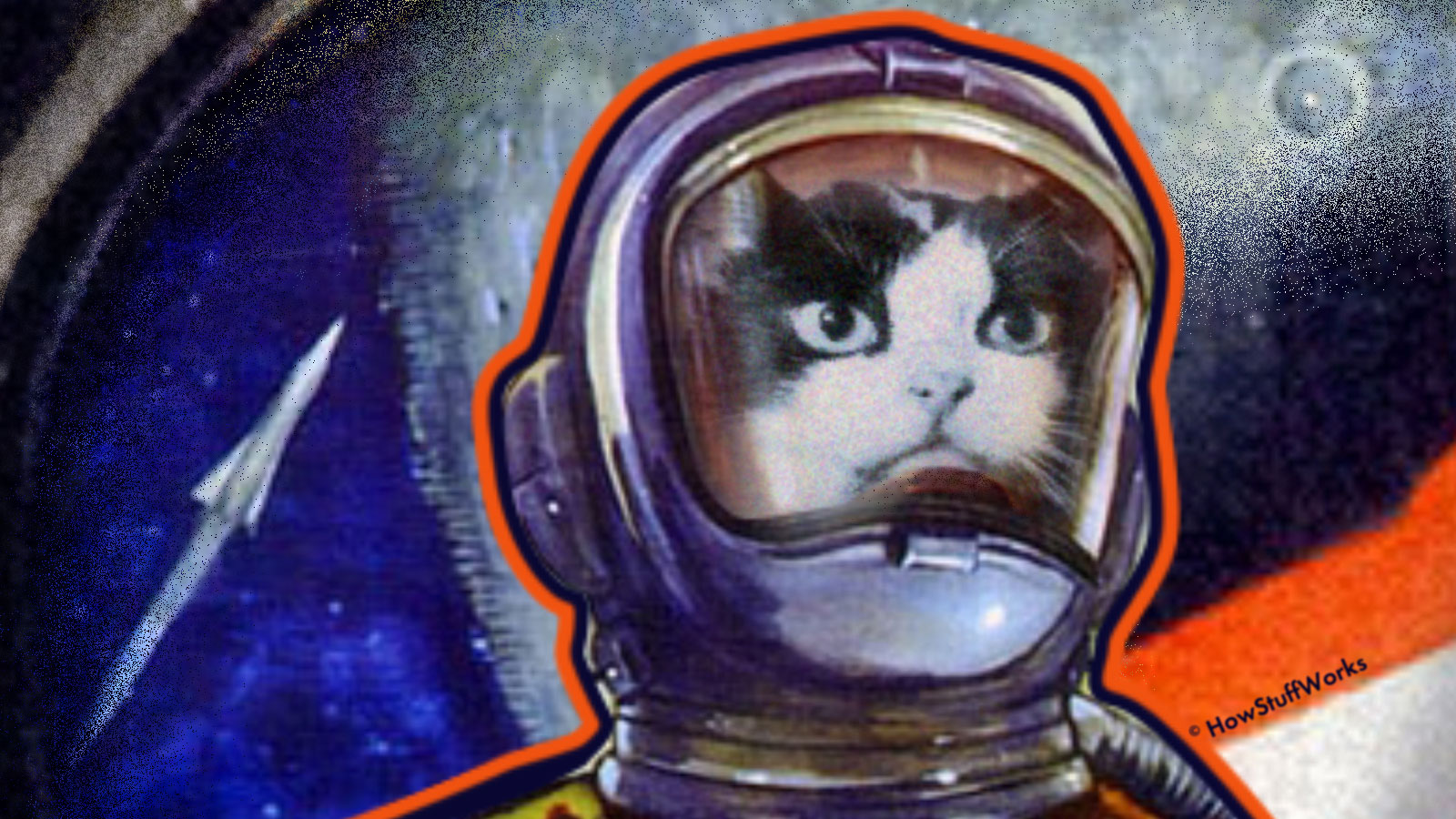 Felicette, the First Feline in Space, Finally Gets Her Due