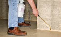 5 Things Exterminators Check During Termite Inspections