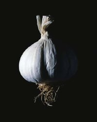 As few as two servings a week of garlic can prevent colon cancer.