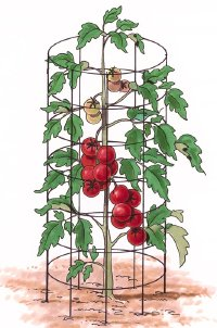 Tomato types in a cage.