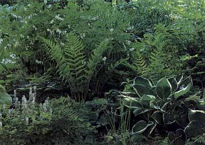 Traditional Shade Garden Ideas   HowStuffWorks on tropical garden design, desert garden design, wetland garden design, subtropical garden design, bird friendly garden design, coastal garden design, jungle garden design, tree garden design,