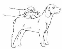 How to Treat a Burned Dog - How to Give First Aid to Your Dog: Tips