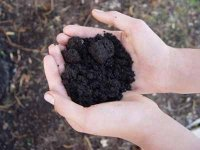 Good soil is a key to healthy vegetable plants.