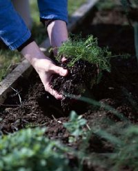 Fertilizing your garden is a two-stage process.