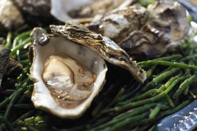 Oysters and other animal foods are good sources of vitamin B12.