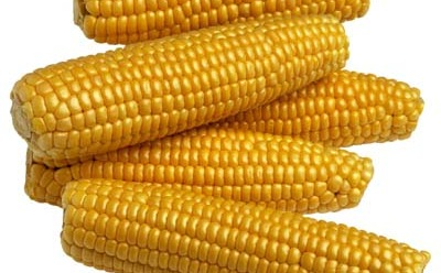 In 1915, researchers linked the disease pellagra with a corn-based diet.