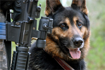 How War Dogs Work Howstuffworks