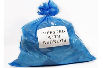 How Do Bed Bugs Hide In Clothes